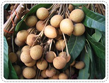 http://pim.in.th/images/pim-nature/longan2011/00.JPG