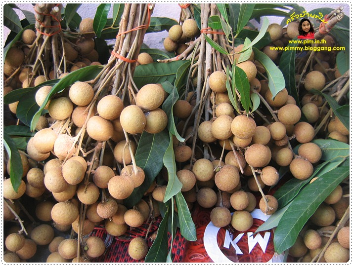 http://pim.in.th/images/pim-nature/longan2011/06.JPG